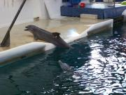 Delfinarium - Výlety - Bulharsko - 23